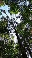 Jundiaí - State of São Paulo, Brazil - panoramio (45).jpg