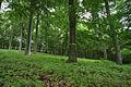 Křivoklátsko - Stromy k pokácení.JPG
