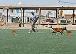 KAF vet clinic holds event to mark World Rabies Day 140927-Z-BQ261-115.jpg