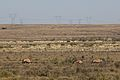 Karoo National Park 2014 15.jpg