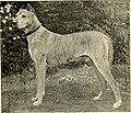 Kennel secrets - how to breed, exhibit, and mannage dogs (1904) (14586614158).jpg