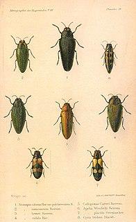 Hans Pochon Swiss entomologist (1900-1977)