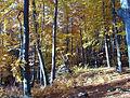 Kirkeler Wald 2003-11-06 04.JPG