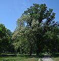 Kirovograd Park Kosmonavtiv 08 (YDS 4782).JPG
