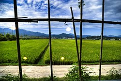 Korea-Damyang-Rice paddy field-01.jpg