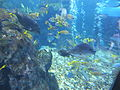 Kyoto Aquarium in 2013-5-2 No,45.JPG
