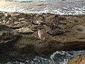 La Jolla Cove 13 2014-01-09.jpg