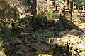 La Palma - El Paso - LP-301 - Poblado de Cabañas del Barranco de Las Ovejas 23 ies.jpg