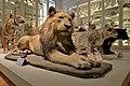 La Rochelle - Lion.jpg