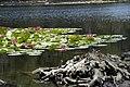 Lac de Creno - panoramio.jpg