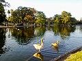 Lago del Planetario.jpg