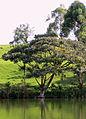 Lake Bunyonyi (8235929525).jpg