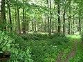 Landschaftsschutzgebiet Horstmanns Holz Melle -Waldanfang- Datei 9.jpg