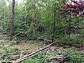 Landschaftsschutzgebiet Strothheide Melle Datei 24.jpg