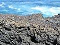 Lava field in Arcos, Pico island - panoramio.jpg