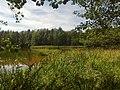Leśny staw 2 - panoramio.jpg