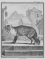 Le Renard - Fox - Gallica - ark 12148-btv1b2300254t-f6.png