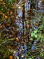 Leaves and reflections in a mossy puddle 4.jpg