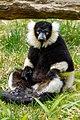 Lemur (27618615158).jpg
