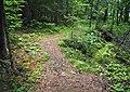 Listening Point trail.jpg