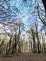 Listopadna šuma, Fruška gora.jpg