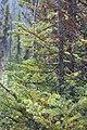 Little Yoho Valley IMG 4894.JPG