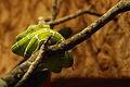Lizards Alive - Fernbank Museum - Atlanta - Flickr - hyku (15).jpg