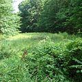 Loantaka Brook Reservation bikeway view of foliage.jpg