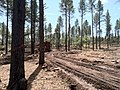 Logging Temporary Road (8692552019).jpg