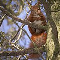 Looking from a branch (27025392208).jpg