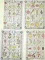 Lotto (3561756632).jpg