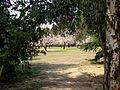 Luz en la Quinta de los Molinos.jpg