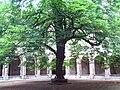 Lycée Fabert - cloître du marronnier.jpg
