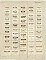 MA I437620 TePapa Plate-XXI-The-butterflies full.jpg