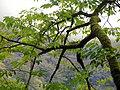 Mahmudabad, Mazandaran جنگل های زیبای شمال ایران-محمود آباد.jpg