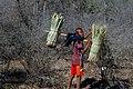 Malagasy boy carrying fodder.jpg