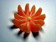 Mandarin fruit.jpg