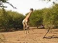 Mapungubwe Cultural Landscape-114926.jpg