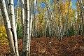 Marion Brooks Natural Area (2) (8064465145).jpg
