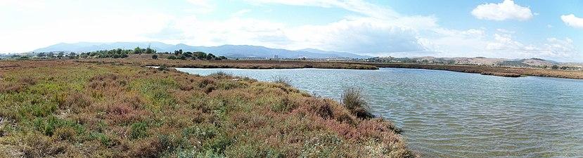 Marismas del río Palmones 01.JPG