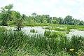 Marshland on Gottfredson Road, Superior Township, Michigan.JPG
