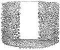 Mastigoteuthis agassizii2.jpg