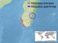 Matoatoa sp. distribution.png