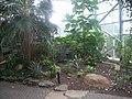 Meijer Gardens October 2014 52 (Tropical Conservatory).jpg