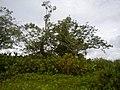 Micos junto al Rio Cacaricas, Chocó - panoramio.jpg