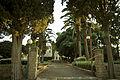 Mikveh Israel IMG 0568 (14368599831).jpg