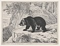 Mississippi Bear MET DP874142.jpg