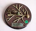 Modell von Mnium cuspidatum -Brendel Nr. 191-.jpg
