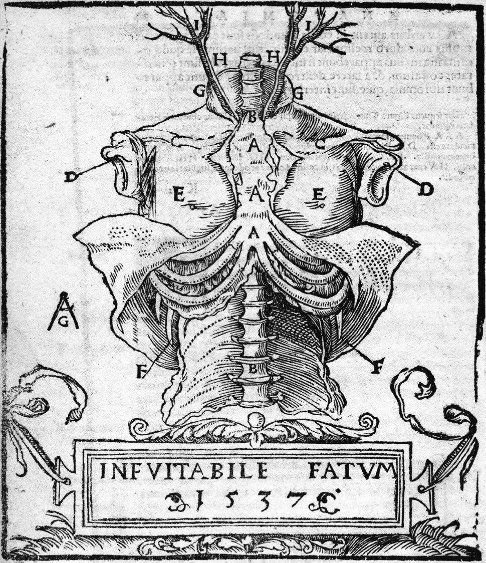 Mondino - Anathomia, 1541 - 3022668