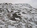 Montane heath, Druim Fada - geograph.org.uk - 656845.jpg